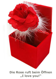 Rose in der Box